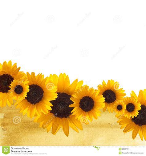 sunflower border stock image image