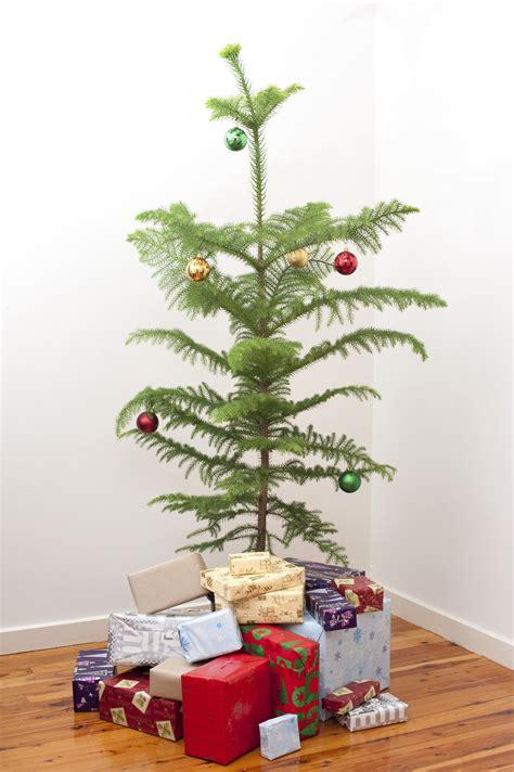 small christmas tree 8250 stockarch free stock photos