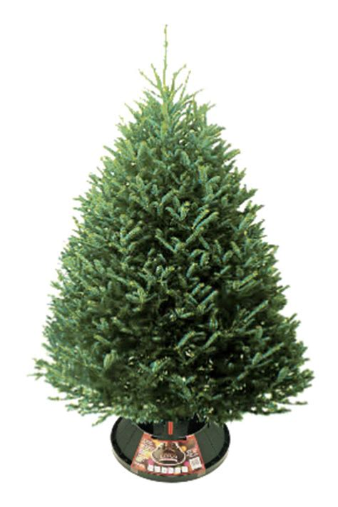 fraser fir christmas tree in omaha nebraska fresh cut