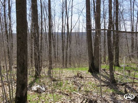 Wi Small Search Small Northern Wisconsin Tract Offers Large Acreage Opportunities