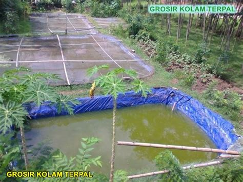 Bibit Lele Kediri cara budidaya lele kolam terpal agro terpal