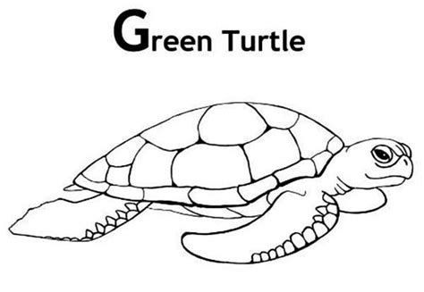 free coloring pages of green sea turtle