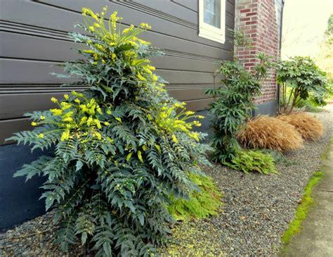 Winterpflanzen Für Den Garten by Immergr 252 Ne Pflanzen Die Ihrem Garten Charme Vermitteln