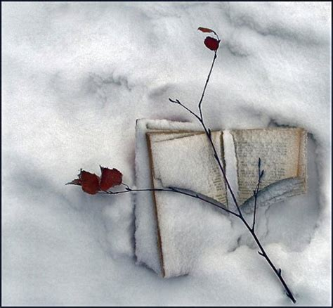 snowball oranges one mallorcan winter books ð ð ð ñ ð ð ð ñ ð ð ð ñ ñ ð ð 1 â ð ð ñ ñ ñ ð ð ð ð ðµð ñ