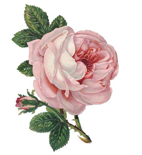 Flower Vintage flower vintage 183 free image on pixabay