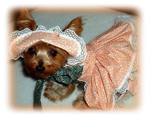 crochet patterns small dog clothes  crochet patterns