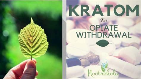 Best Kratom For Opiate Detox by Nootroholic Empower Yourself With Kratom Nootropics