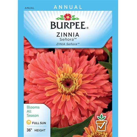 burpee zinnia senora seed 39658 the home depot