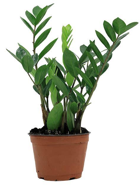 indoor plants   buy   favorite amazon shop