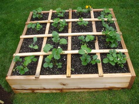 how to plant strawberries in a raised bed 25 best ideas about grow strawberries on pinterest how