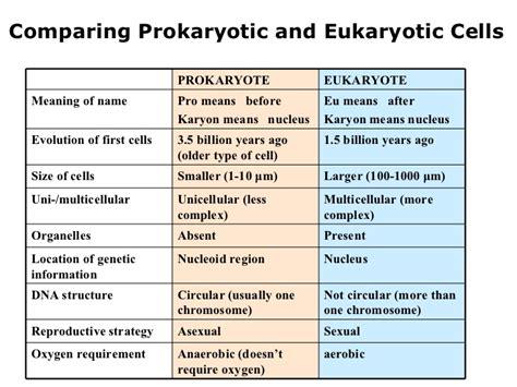 Prokaryotic And Eukaryotic Cells Worksheet prokaryotic and eukaryotic cells worksheet lesupercoin