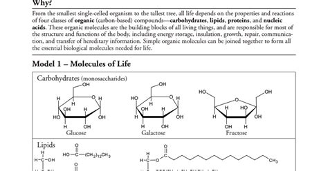 Mba 2 Biological Molecules by Biological Molecules Pogil Pdf Drive