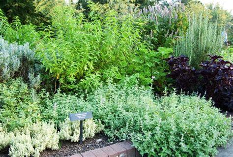 herb gardens   grow herbs indoors