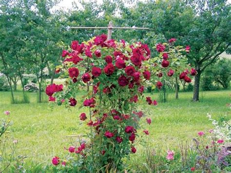 Trellis Flowers country lore used tv antenna climbing flowers trellis diy earth news