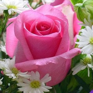 Gamis Roseflowry best hd flower wallpapers android apps on play