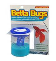 learn all about how to properly feed your beta fish feeding betta fish
