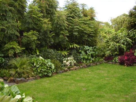 best trees for backyard privacy 53 best images about fast growing plants for privacy on
