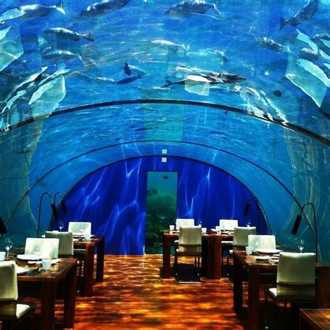 ithaa undersea restaurant ithaa undersea restaurant maldives islands asia you