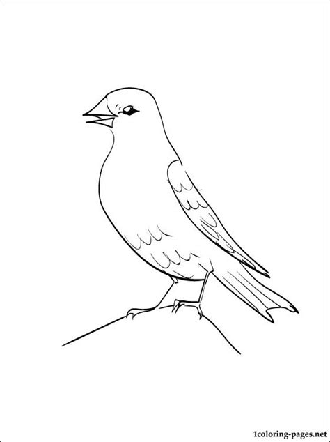 zebra finch coloring page free picture of finches coloring pages