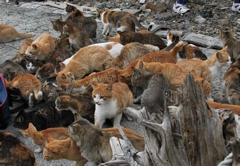 caretaker of japan s cat island is overwhelmed with cat island aoshima