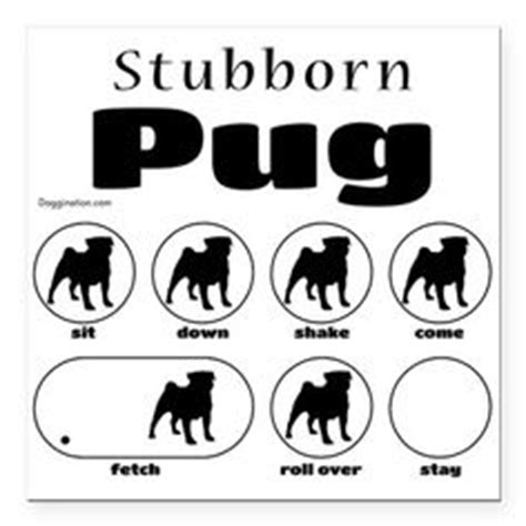 stubborn pug tricks 1000 images about stubborn tricks on japanese chin border terrier