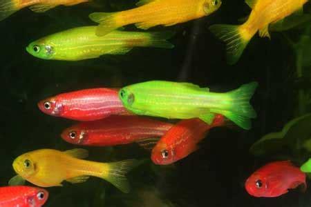 petsmart fish