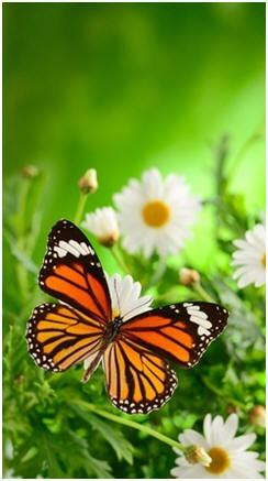 how to attract butterflies to your backyard how to attract butterflies to your garden