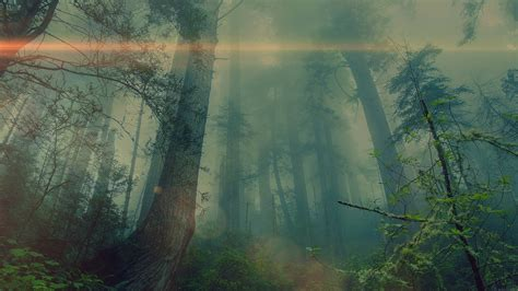 wallpaper  desktop laptop mn forest wood fog flare
