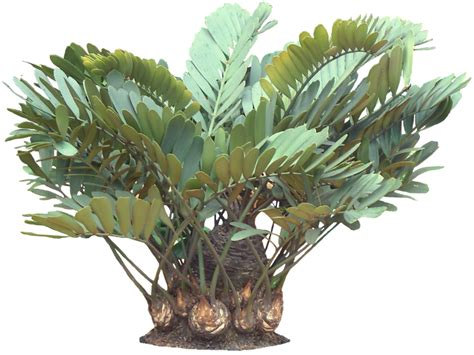 plants in the tropical tropical house plants images
