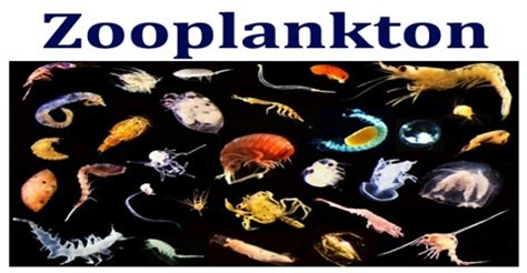 zooplankton assignment point