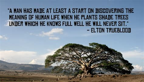 tree quotes quotes about trees yourhappyplaceblog