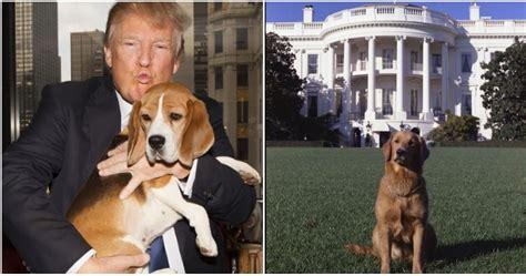 pooch  president trump refuses    dog