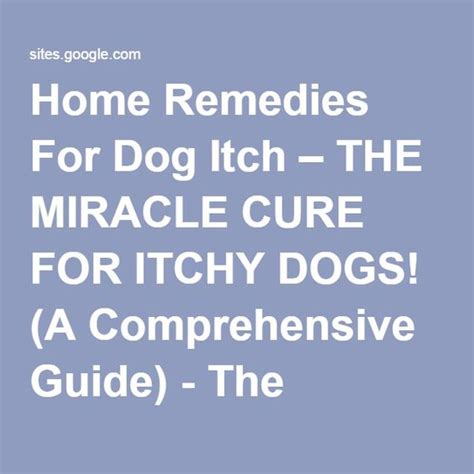 remedies for itchy dogs poodles home and itchy on