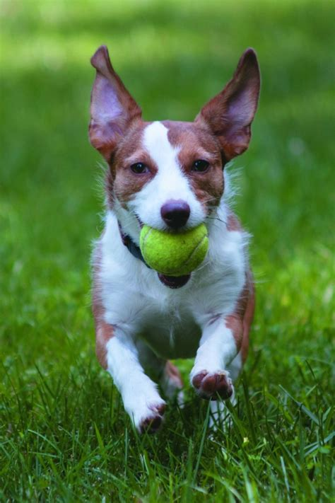 how to to play fetch play fetch with pets shelter dogs dogslife breeds magazine