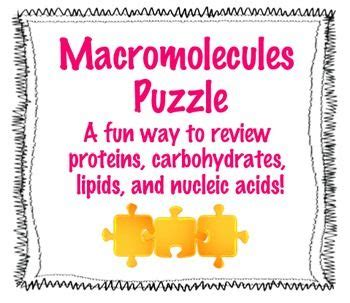 activity 3 carbohydrates puzzle answers 14 best biology macromolecules images on
