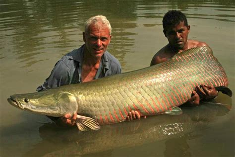Pictures Of River Monsters