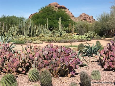 Desert Botanical Garden Membership 4 Places For Family In Scottsdale Traveling With Sweeney