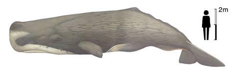 stress pattern sperm adalah jenis macam gambar hewan mamalia laut air freewaremini
