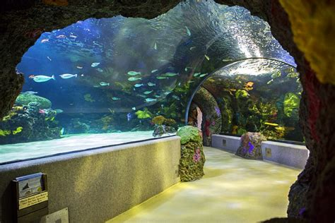 lighting stores in virginia beach 12 top rated tourist attractions in virginia beach