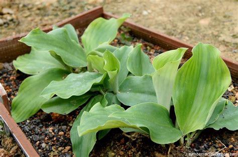 tanaman herbal  pekarangan rumah  ternyata bisa