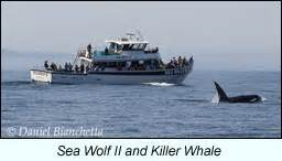 charter boats monterey bay monterey bay boat charters whale watching seabird trips