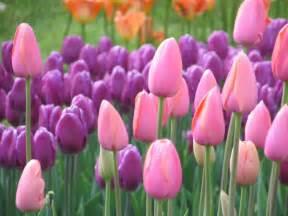 Best flowers for a feng shui flower garden