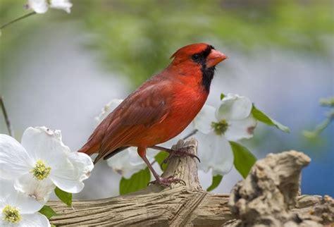 best 28 cardinal toledo ohio cardinal stritch tops