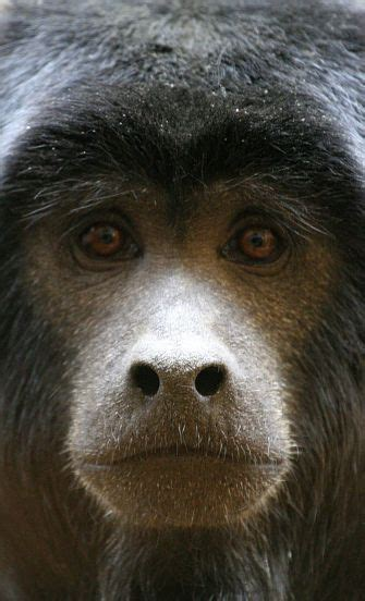 monkey facts animal facts encyclopedia