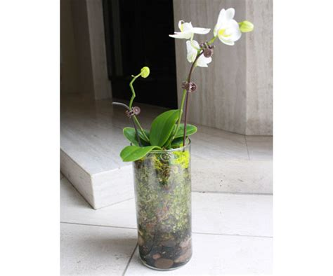 how to plant orchids in glass terrarium vases popsugar home