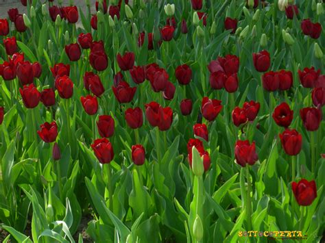 sfondi per desktop fiori sfondi gratis per il desktop natura fiori e animali