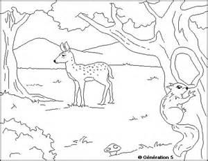 coloriage animaux foret les beaux dessins de meilleurs