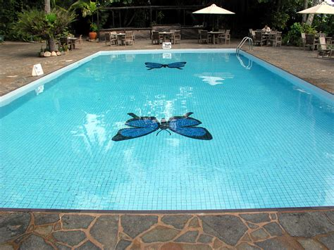 Cost Of Backyard Pool Pool How Much Swimming Pool Cost In Modern Home Backyard Blue Butterfly In The Bottom Swimming