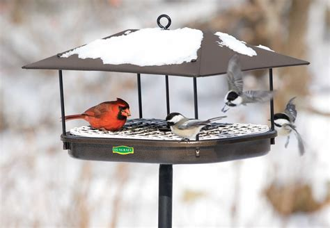 best bird feeders for winter bird cages