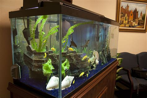 fish tank and fish aquarium design installations and